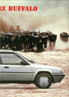 buffalo6